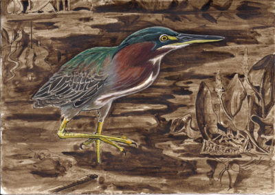 GreenHeron7-1
